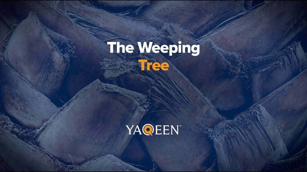 The Weeping Tree | Animation