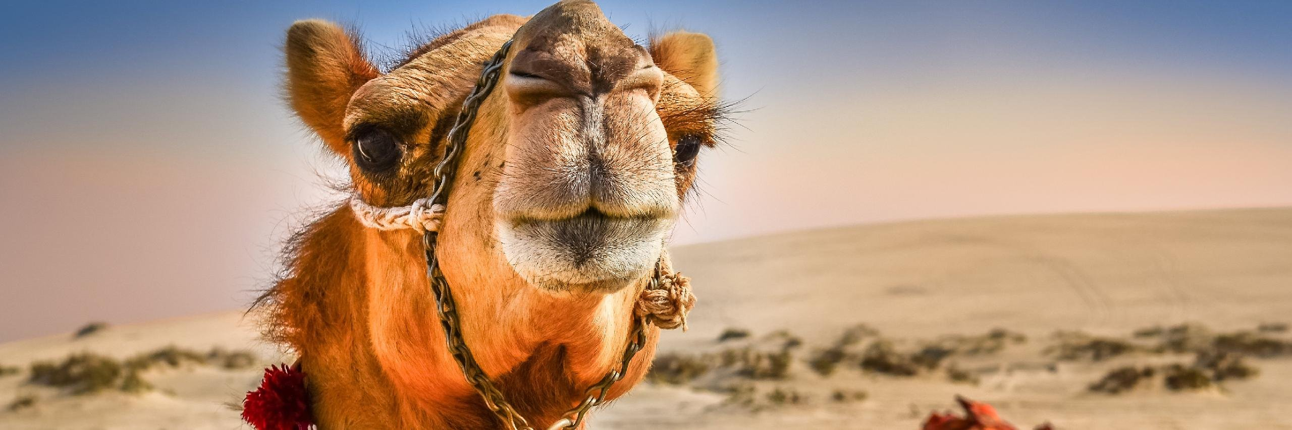 Tying Your Camel: An Islamic Perspective on Methodological Naturalism