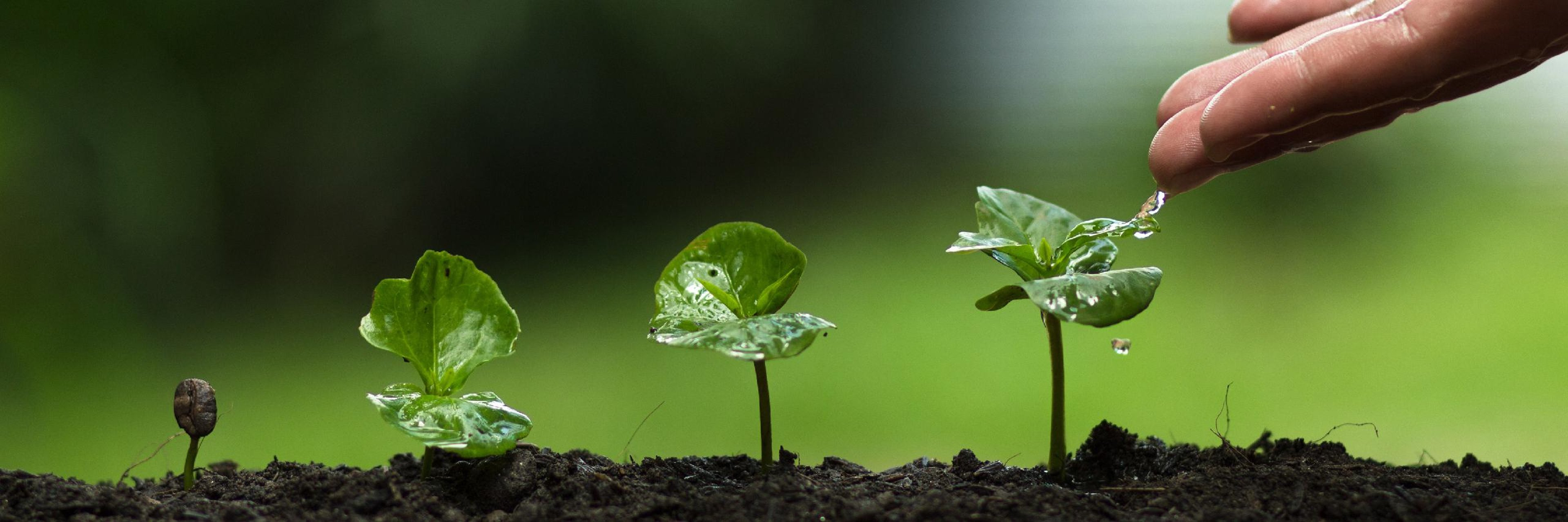 When the Earth Speaks Against Us: Environmental Ethics in Islam